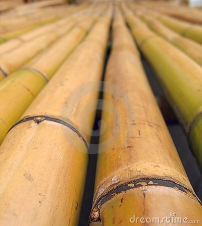 Closeup of Bamboo Poles