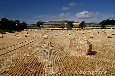 Cut and Baled