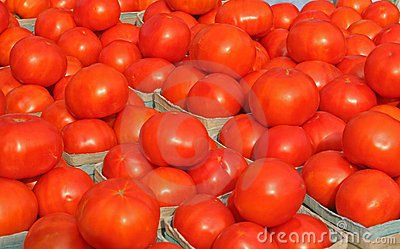 Bright Tomatoes 2