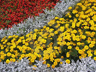 Detail photography of flower-bed