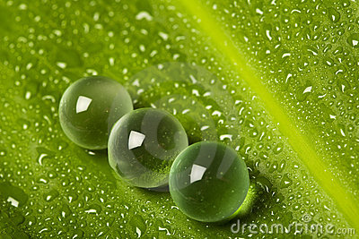 Marbles on wet leaf