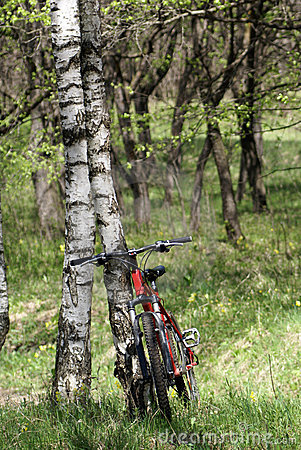 Bike and birch