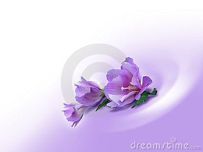 Violet background_flowers