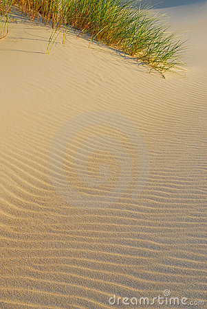 Beach and dunes background