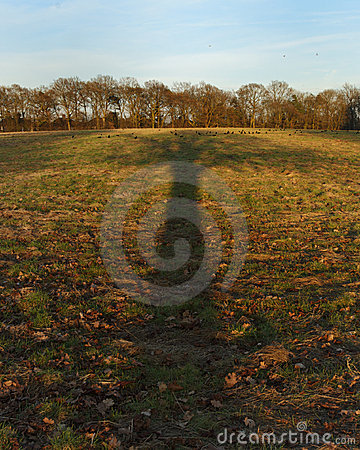 Tree shadow in countryside