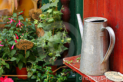 Watering Tin can