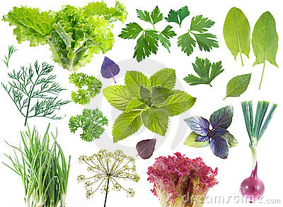 Salad leaves and herbs