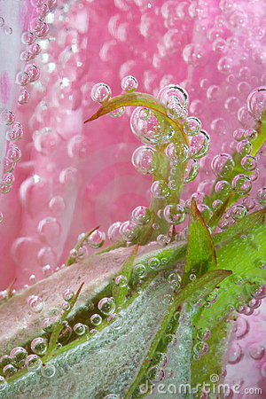 Pink rose bubble leaf