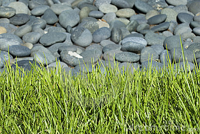 Rock bed with grass