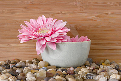 Pink daisy in bowl with river rocks and bamboo - s