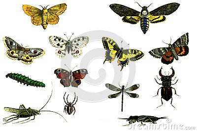 Moths and butterflies on a white background.