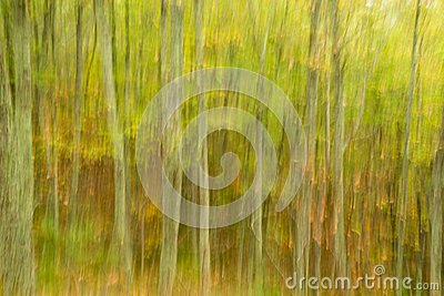 Abstract Image of a Forest