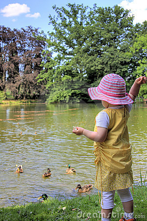 Little girl feeding ducks