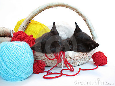 Two kitties sleeping in the basket with yarn