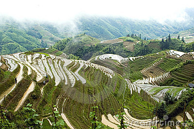 Terraced rice fields in Guilin, Longshan