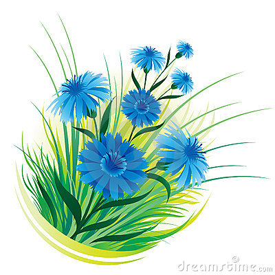 Cornflower and grass