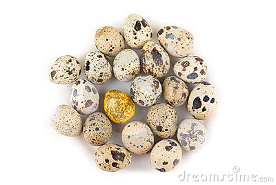 One Gold quail egg