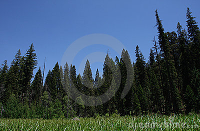 National Sequoia Park Crescent Meadow