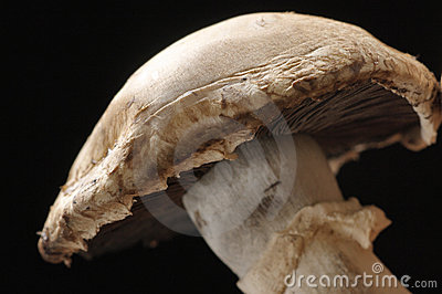 Agaric close-up