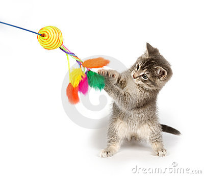 Gray kitten playing with toy