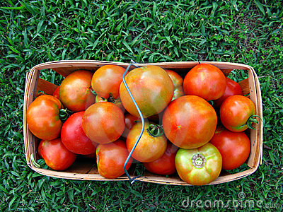 Basket of Farm Fresh Tomatoes