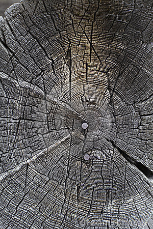 Circular old wood texture with nails