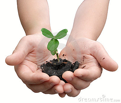 Child's hands holding a small plant