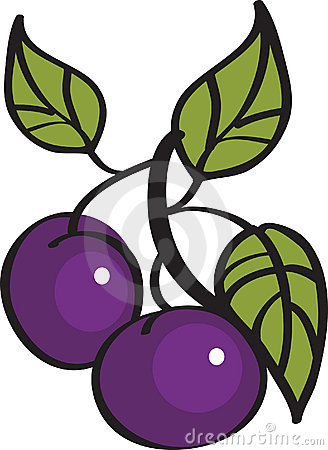 Vector illustration of plums