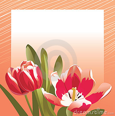 Congratulation card with tulips