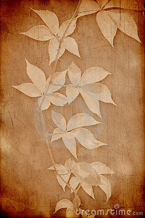 Vintage paper with grape leaves