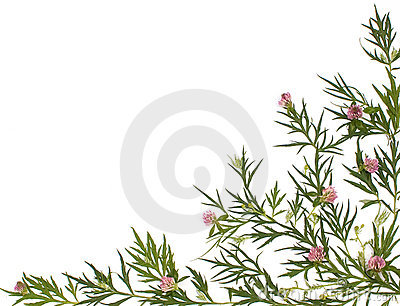 Herbal medicine background