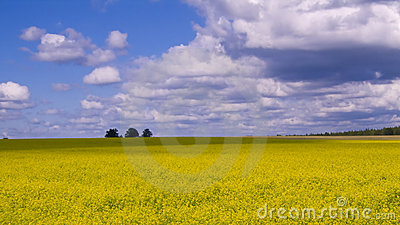 Wide open countryside