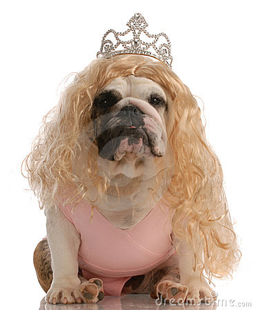 Ugly dog dressed as a princess