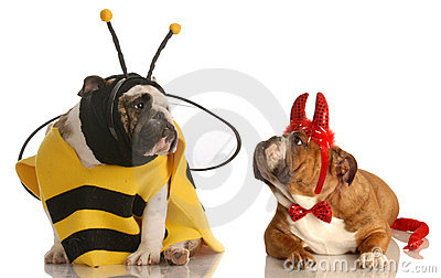 Two dogs dressed for halloween