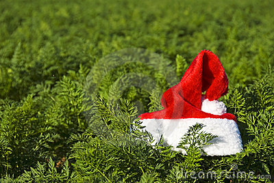 Santa's hat in a farm field
