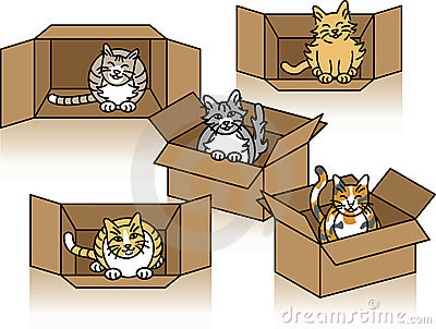 Cute Cats in Cartons