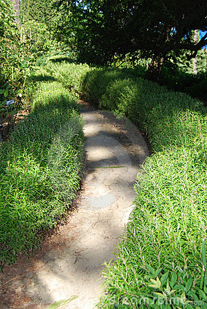 Hedges of rosemary