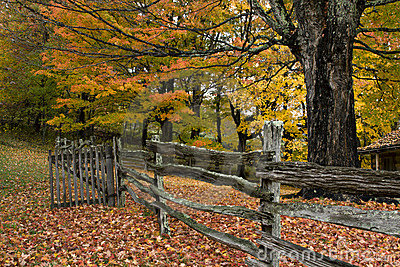 Autumn trees, leaves and fence