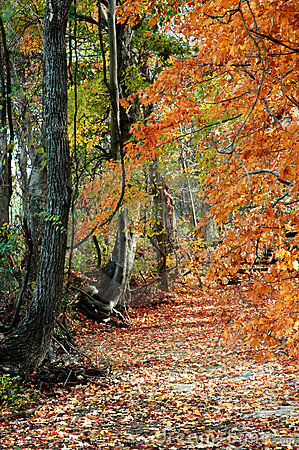Fall Trees and Path
