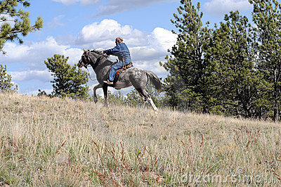 Endurance ride wild horse breed