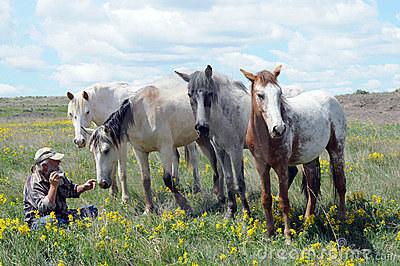 Spanish Mustang horses  with photographer
