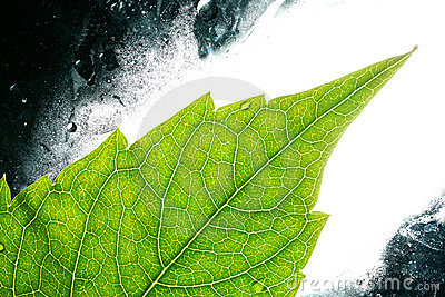 Illuminated green leaf