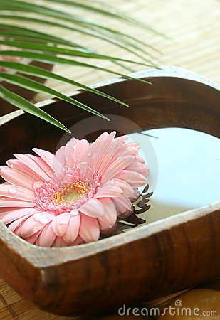 Pink gerber floating in wooden bowl.