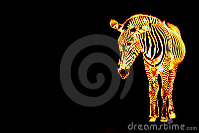 Fiery Flaming Zebra