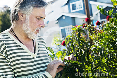 Portrait of a mature man in the garden