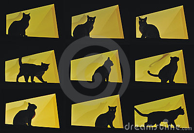 Nine cat poses-black cat on yellow background