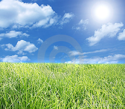 The blue sky and green grass.