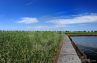 Wooden bridge in the lake