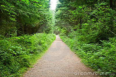 Walking Path in Capilano Park, Vancouver