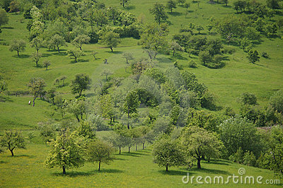 Green grass meadow with trees